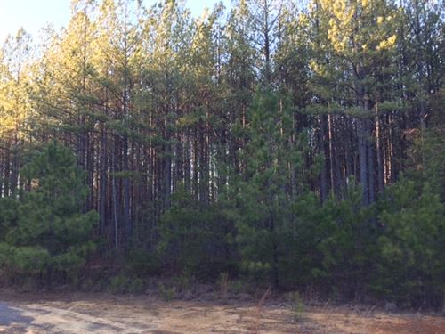 15+/-Acres Wooded Lot With Creek : South Pittsbrug : Marion County : Tennessee