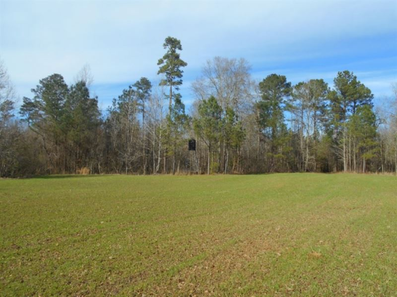 89.44 Acres In Franklin County : Roxie : Franklin County : Mississippi