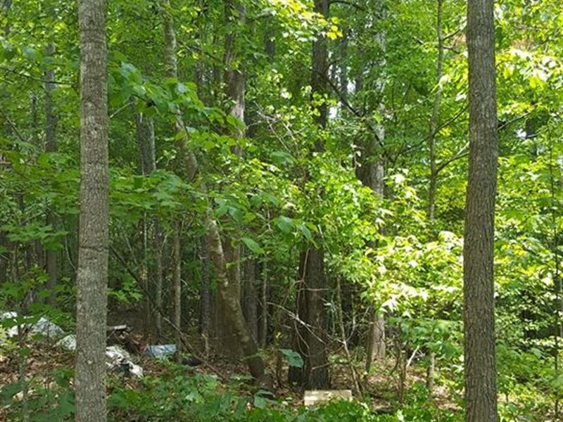 37 Acres Near Blythewood - Privacy : Blythewood : Richland County : South Carolina