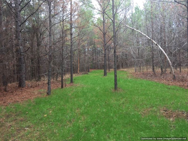 200+/- Ac Hunting Timber Investment : Duck Hill : Montgomery County : Mississippi