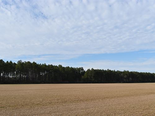 Irrigated Crop Land And Timber : Lakeland : Lanier County : Georgia