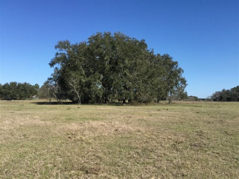 421.15 Acres With Pasture And Woods : Live Oak : Suwannee County : Florida