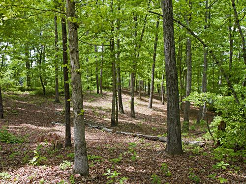 50 Acres With Smith Lake Access : Addison : Winston County : Alabama