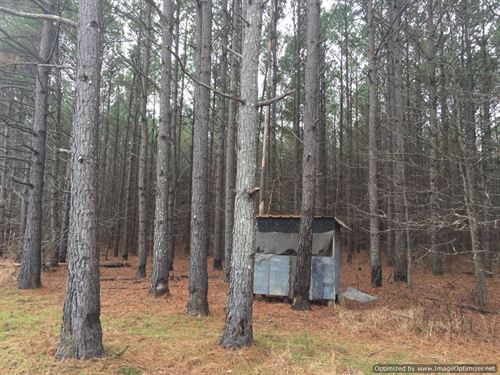 123+/- Ac Hunting/Timber Investment : Duck Hill : Carroll County : Mississippi