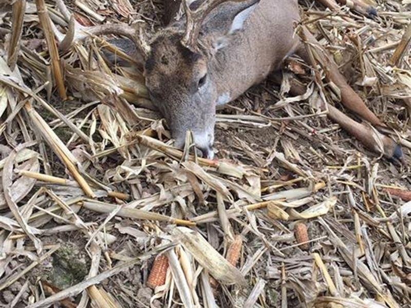 Deer Hunting Camp In Sw Wi : Eastman : Crawford County : Wisconsin