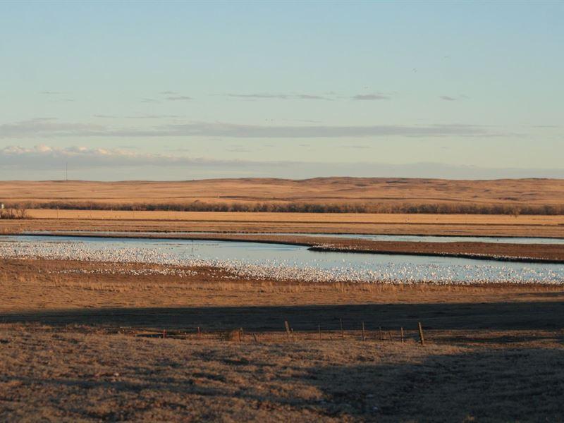 Shallow Waterfowl Hunting Habita : Crook : Logan County : Colorado