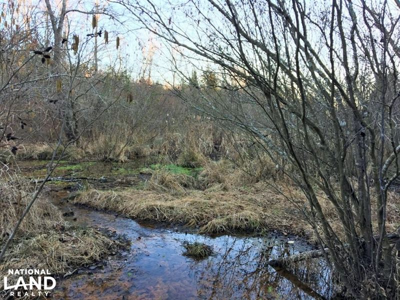Donalds Hunting Land With Creek : Donalds : Abbeville County : South Carolina