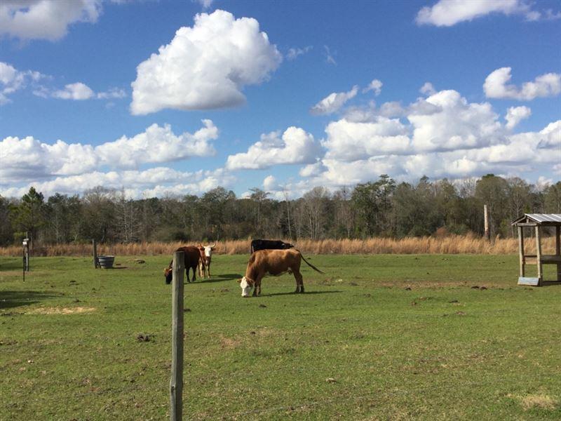 Beall Packing Road Tract : Bonifay : Holmes County : Florida