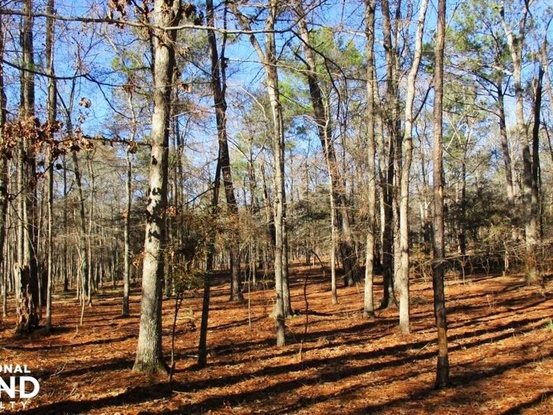 20 Acres Hunting/Timber Land : Fort Gaines : Clay County : Georgia