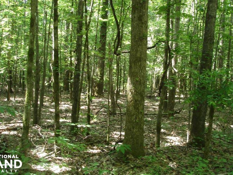 Tombigbee River Bottom : Boligee : Greene County : Alabama
