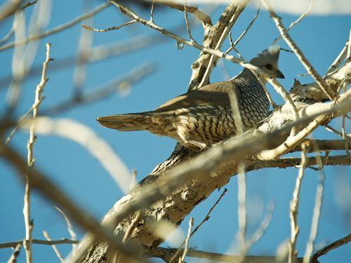 Quail Country Hunting Retreat : Campo : Baca County : Colorado