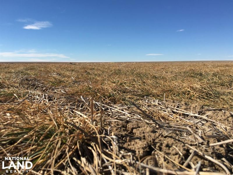 Kiowa County Crp - Income Producing : Eads : Kiowa County : Colorado