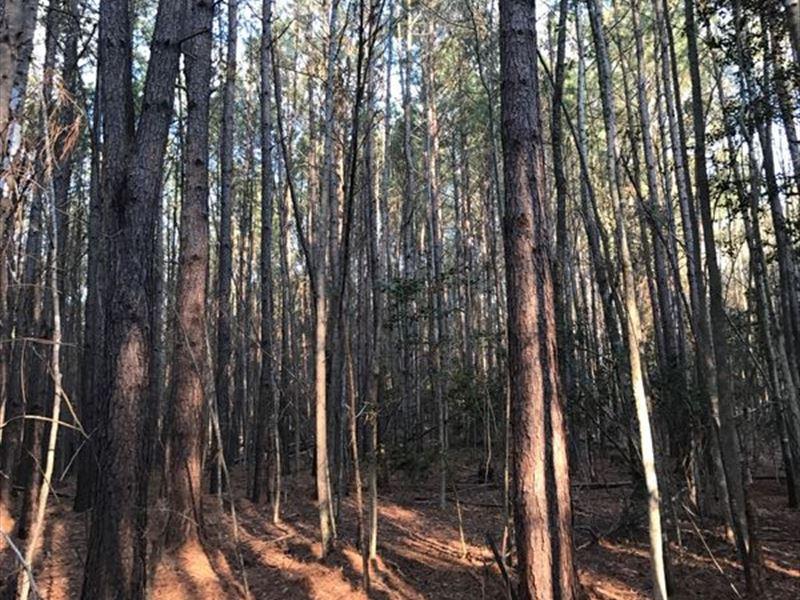 26 Ac Timberland/Recreational Tract : Swansea : Lexington County : South Carolina