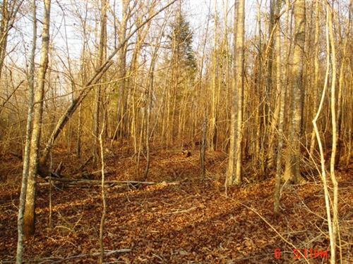 Land For Sale In Louisville, Ms : Louisville : Winston County : Mississippi