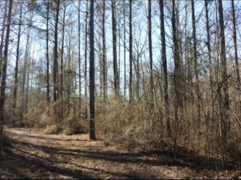 68.5 Acres In Rankin County : Brandon : Rankin County : Mississippi