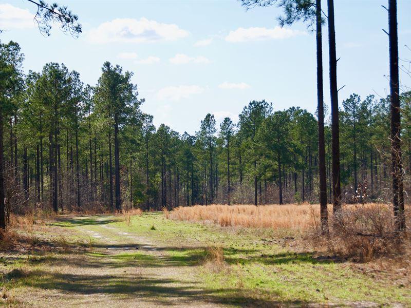 Riverbluff Hunt Paradise : Waynesboro : Burke County : Georgia