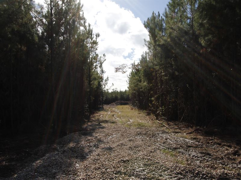 River Bend Lot 1 : Oberlin : Allen Parish : Louisiana