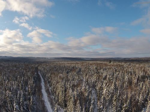 Armstrong Brook Forest : Stockholm : Aroostook County : Maine
