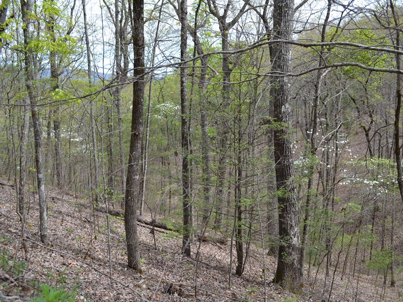 Turkey Pen Property : Vonore : Monroe County : Tennessee