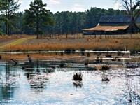Quail Hill Farm : Metter : Candler County : Georgia