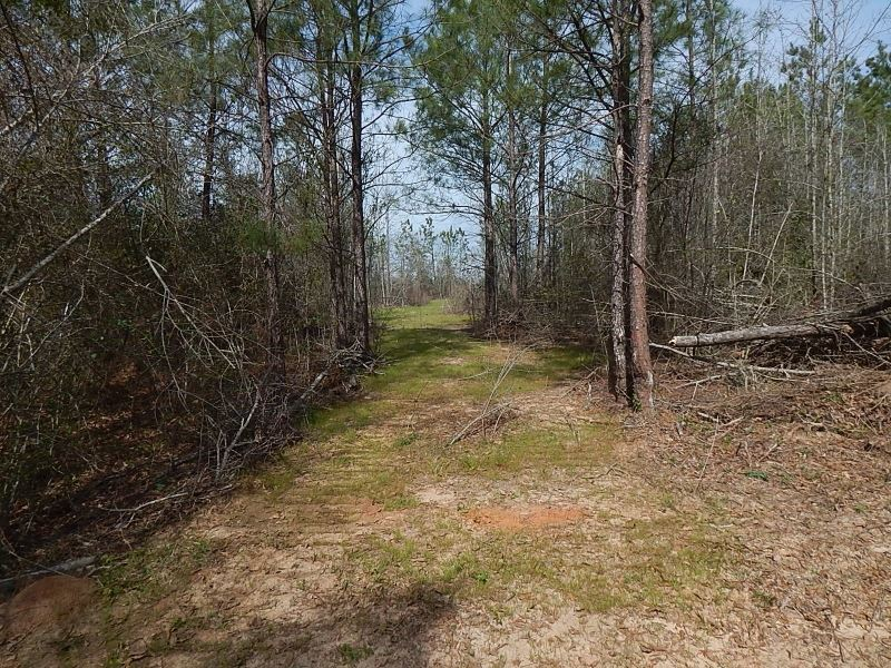 Les Hammond Road 124975 : Kokomo : Walthall County : Mississippi
