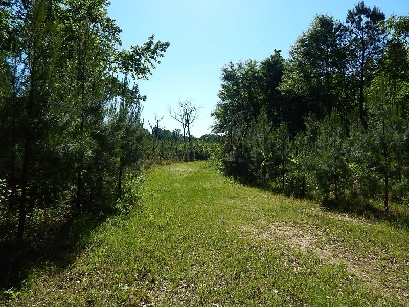 Magee Hill Road / Tylertown 186 : Tylertown : Walthall County : Mississippi