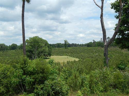 Oak Grove Rd 276 - 124300 : Prentiss : Jefferson Davis County : Mississippi