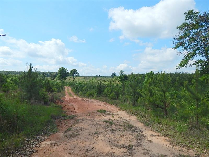 Oak Grove Road (517)-124302 : Prentiss : Jefferson Davis County : Mississippi