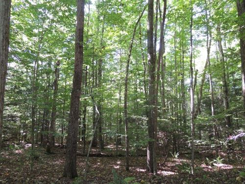 Waterfront Hunting Land : Marathon : Cortland County : New York