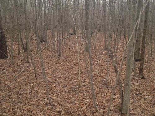 26.5+/- Acres Ideal Hunting : South Pittsburg : Marion County : Tennessee