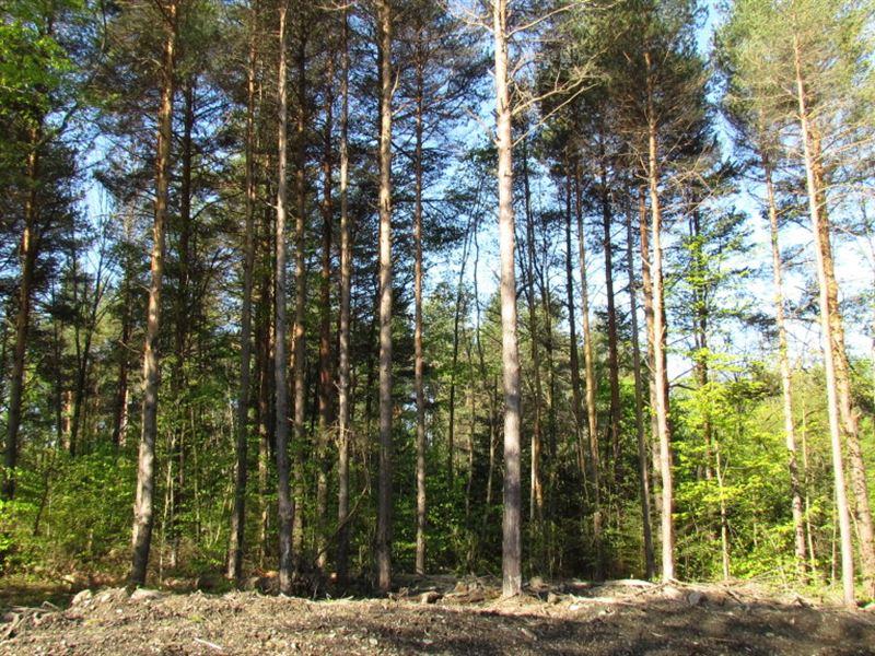 64 Acre Timberland Whitney Point Ny : German : Chenango County : New York