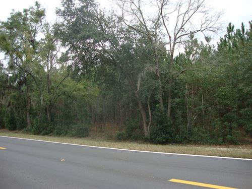 34.63 Acres 773299 : Trenton : Gilchrist County : Florida