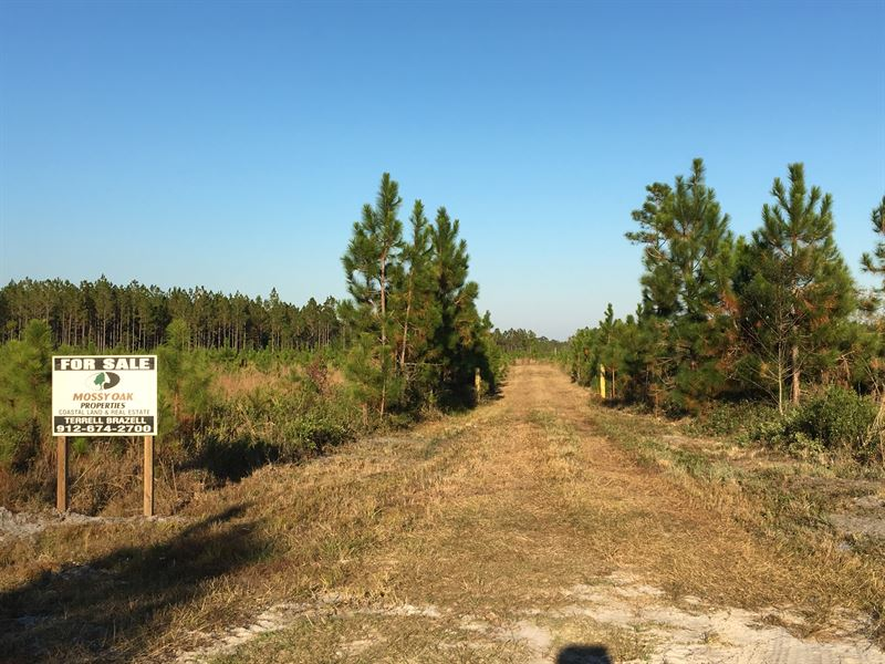 50 Acres Land For Sale : Saint George : Charlton County : Georgia