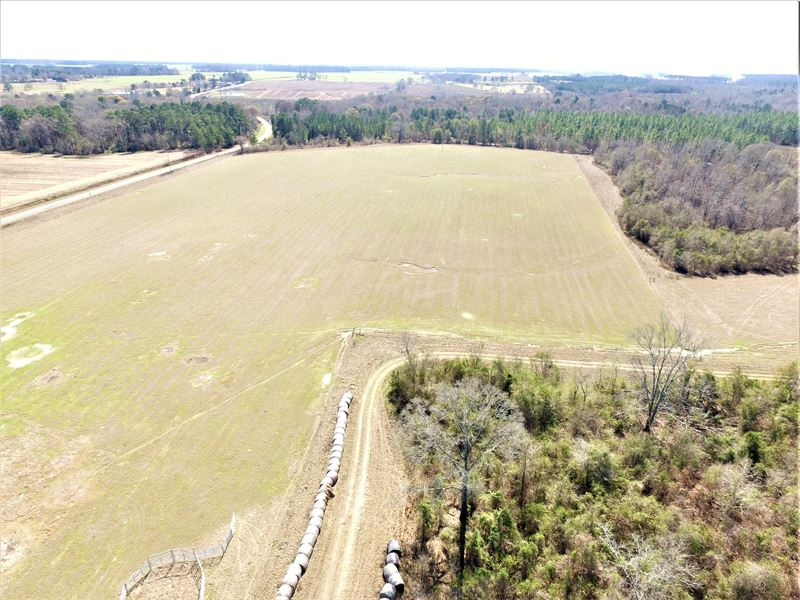 Pasture And Timber Farm In Dooly Co : Vienna : Dooly County : Georgia