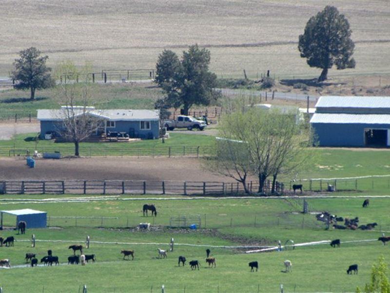 Horse Trainers / Calf Ropers Haven : Bonanza : Klamath County : Oregon