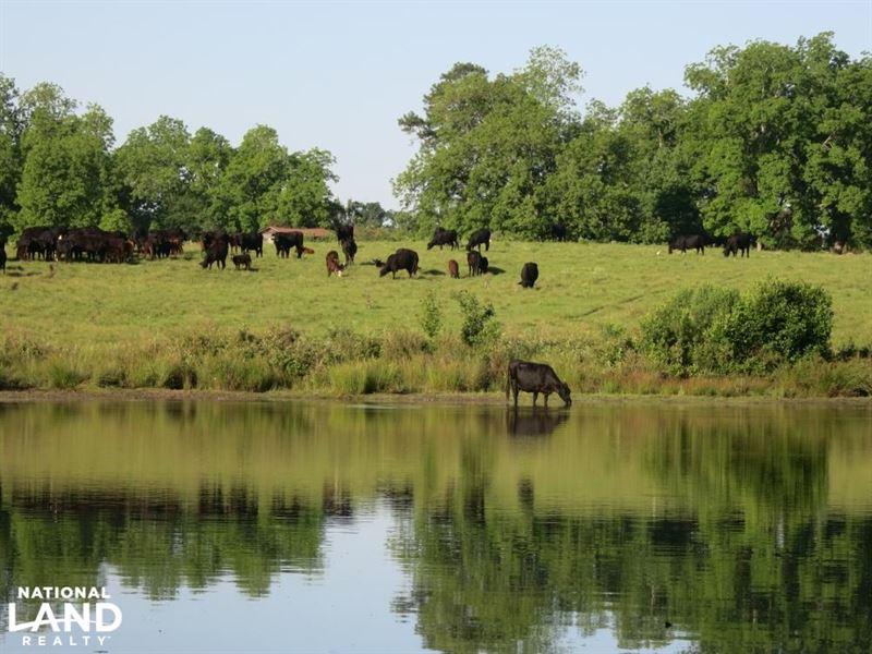 202 Acres Pasture/Farmland : Richland : Stewart County : Georgia