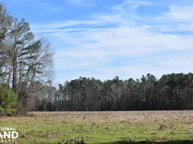 Country Store Road 37 Acres : Saint Stephen : Berkeley County : South Carolina