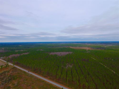 104 Acre Timberland Tract : Manor : Ware County : Georgia