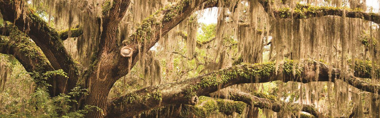 Savannah, Ga Coastal Sites