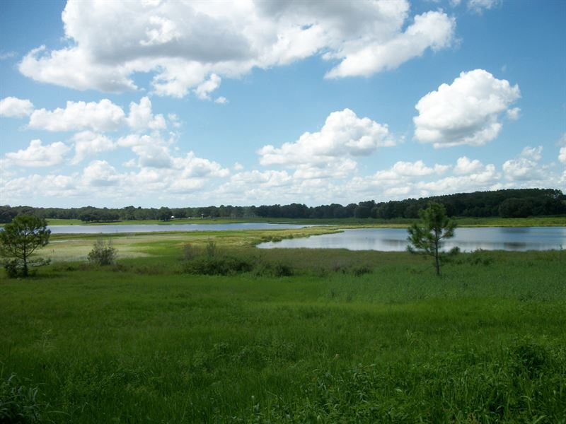 48.7 Ac Lakefront All Or Part : Brooksville : Hernando County : Florida