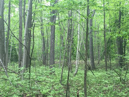 St. Lawrence Area Hunting Land : Norfolk : New York County : New York