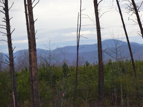 Reduced, 22.23 Acres, The Old Pea : Taylors : Greenville County : South Carolina