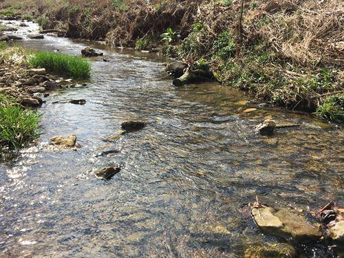 31 Acres Big Buck Paradise : Glasgow : Barren County : Kentucky