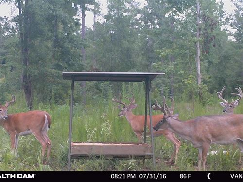 Timber And Irrigated Food Plots : Andersonville : Sumter County : Georgia