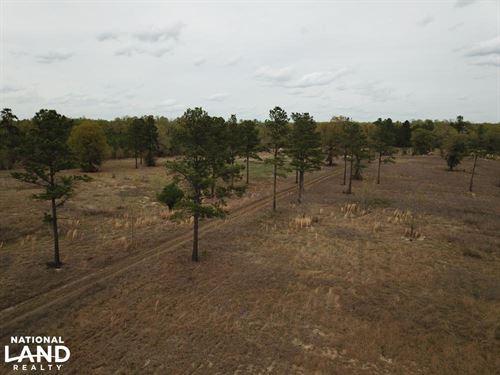 Wahee Hunting Property : Marion : South Carolina