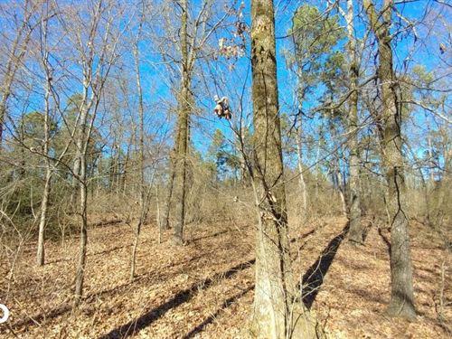 Wye Mountain Residential, Pasture : Wye : Pulaski County : Arkansas