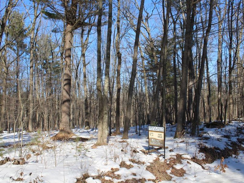 30 Acre Buildable Parcel W/ Hunting : Neillsville : Clark County : Wisconsin