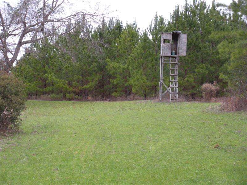 Bullock County Hunting Property : Union Springs : Bullock County : Alabama