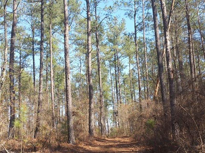 White Pond North Tract : White Pond : Aiken County : South Carolina