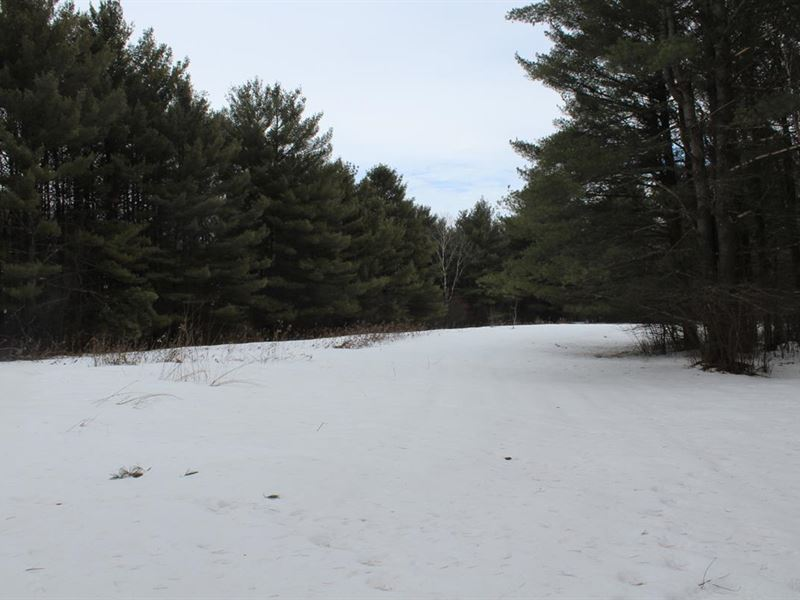 80 Acres Deer Management/Buildable : Marshfield : Wood County : Wisconsin